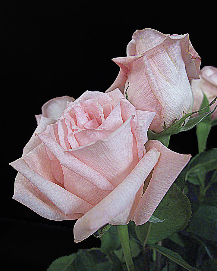 Pink Persuasion by Suzy Piatt