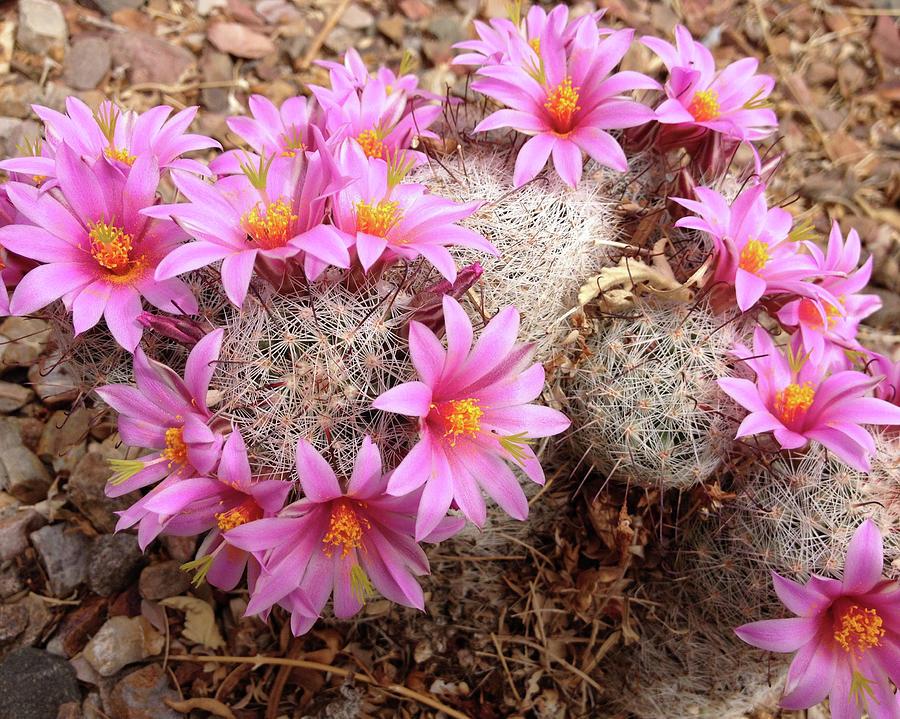 Pink Pincushion by Cheryl Goodberg