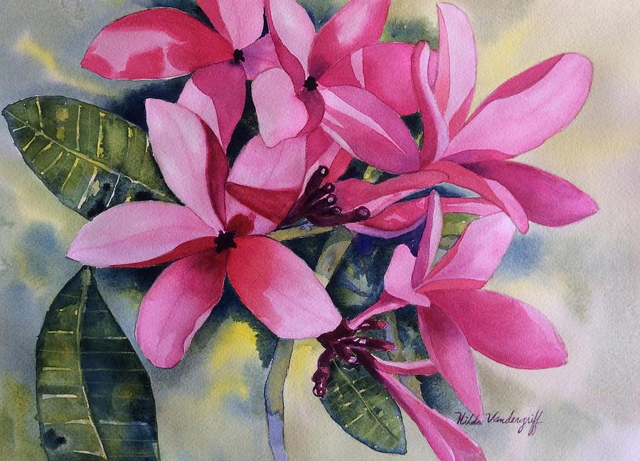 Pink Plumeria Flowers by Hilda Vandergriff
