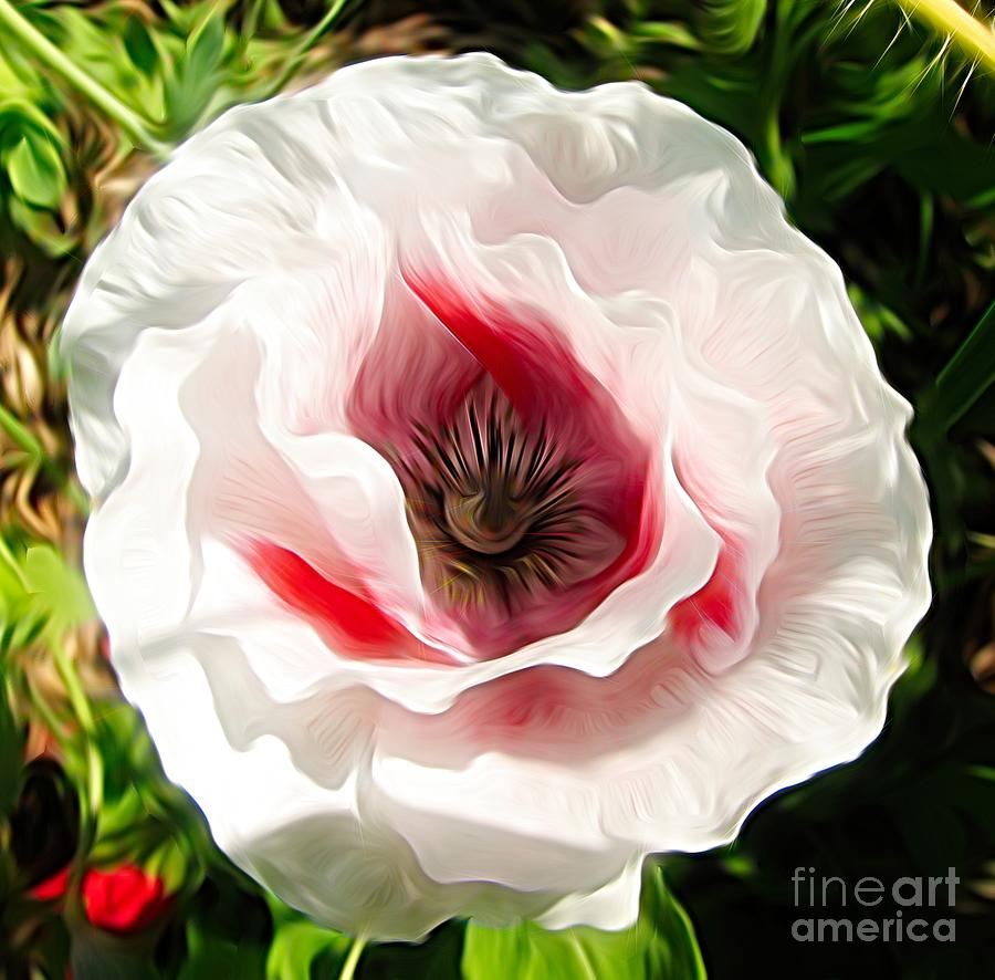 Pink Poppy Flower Abstract Photograph By Rose Santuci Sofranko