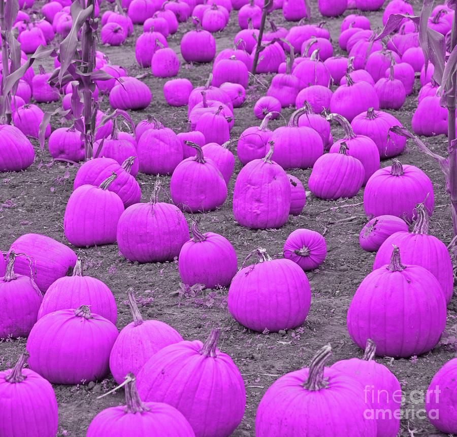 Pink Pumpkin Patch Photograph
