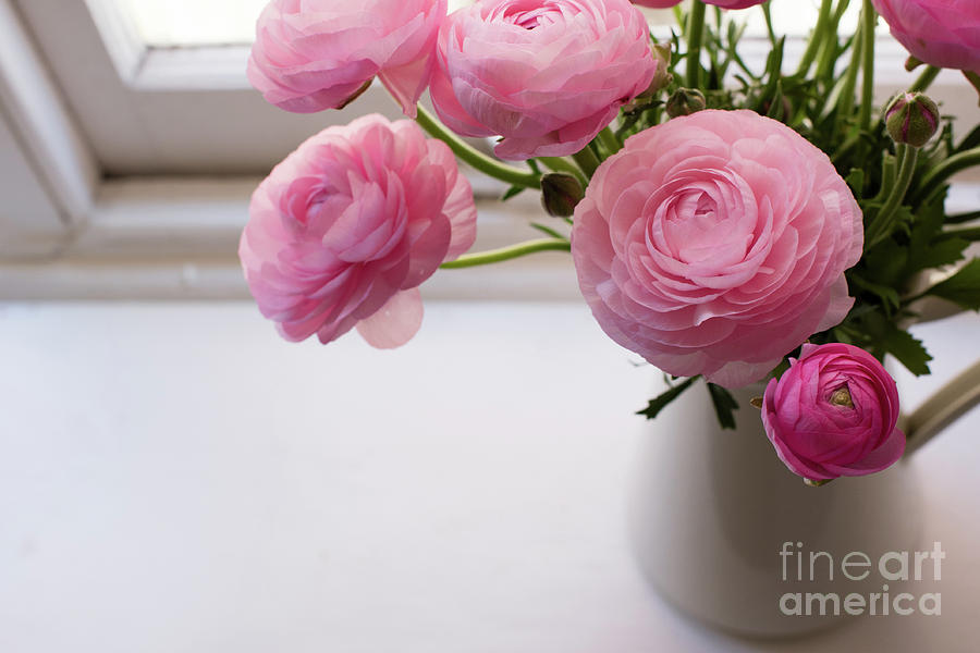 Above Photograph - Pink ranunculus by Natalie Board
