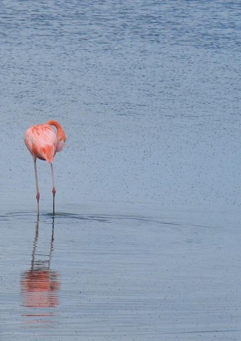 Flamingo Photograph - Pink Reflections by Arry Murphey