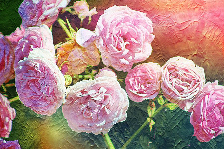 Artwork Photograph - Pink Rose Artwork by Zahra Majid