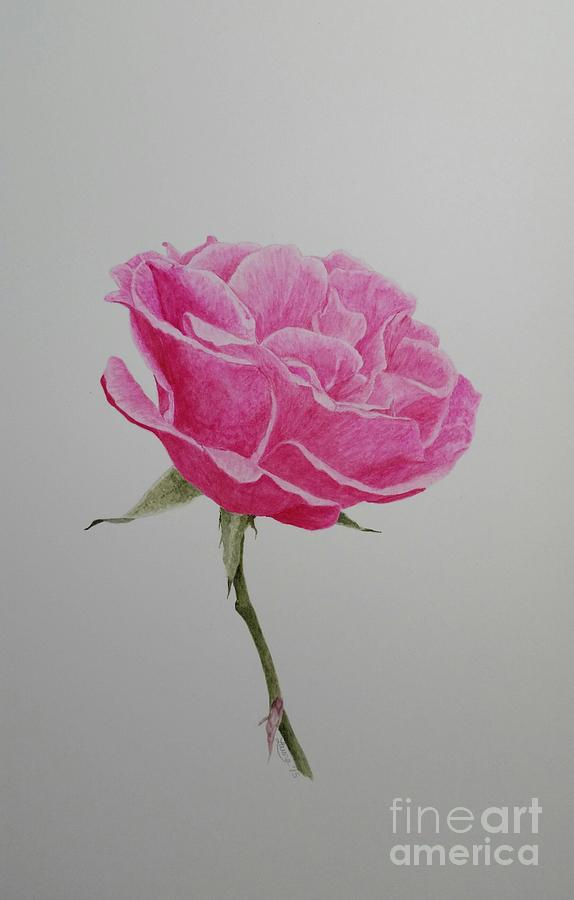 Pink Painting - Pink Rose by Laura Banister