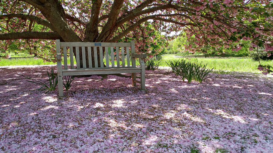 Bench Photograph - Pink Snow by Liza Eckardt