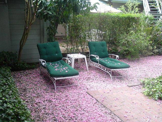 Flowers Photograph - Pink Snowfall by JoAnn Tavani