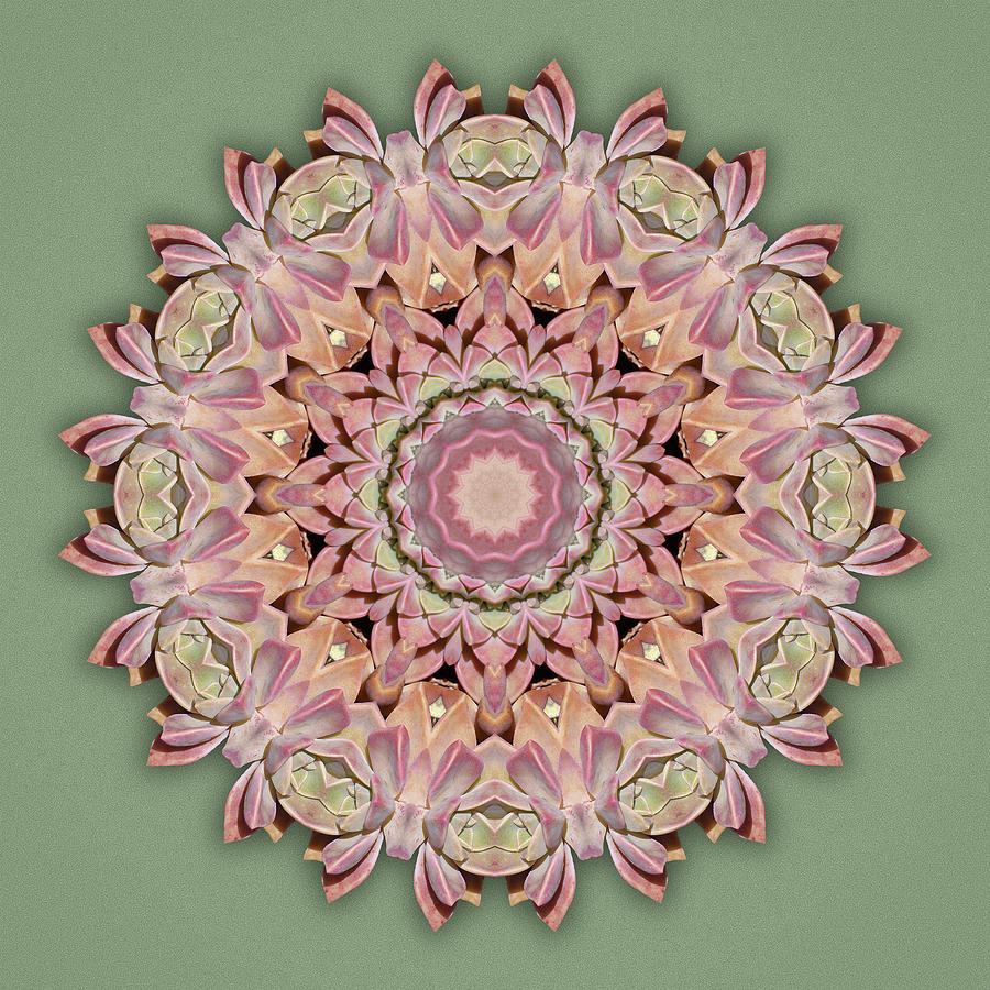 Pink Succulent by Martha Miller