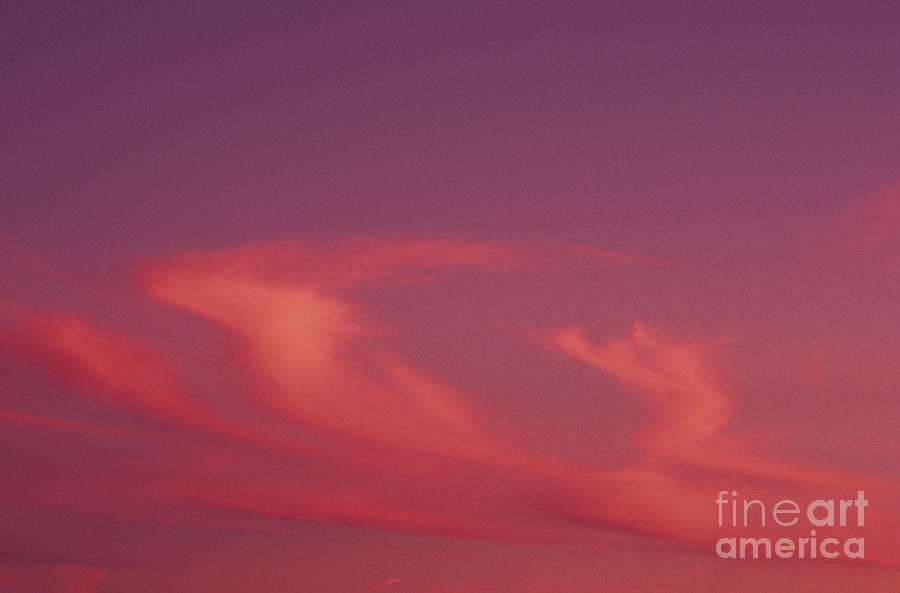 Afternoon Photograph - Pink Swirling Clouds by Carl Shaneff - Printscapes