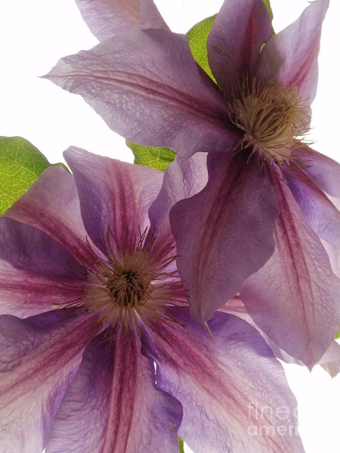 Pink Photograph - Pink Tenderness by Valia Bradshaw
