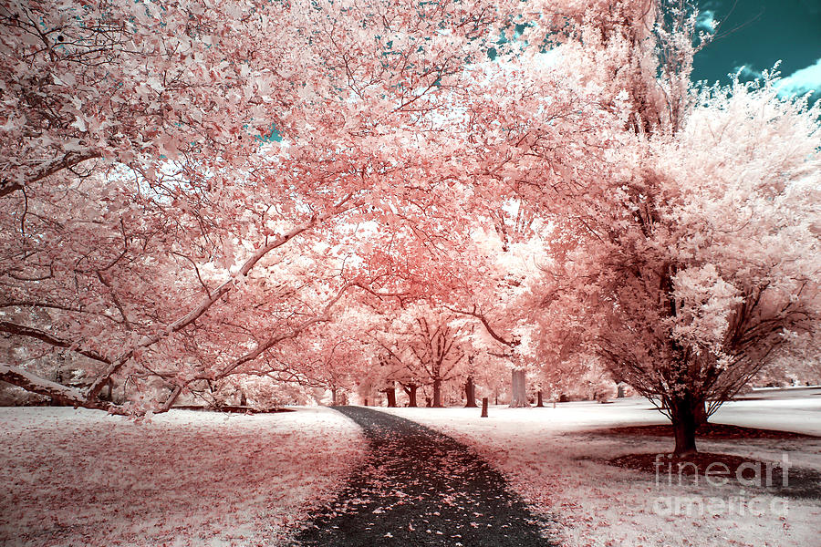 Pink Trees Infrared Photograph By John Rizzuto
