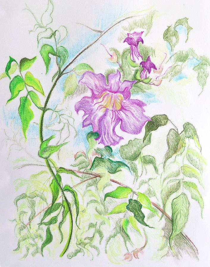Botanical Mixed Media - Pink Trumpet Vine by Bonnie See