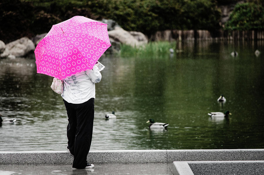 Ducks Photograph - Pink Umbrella by Emily Bristor