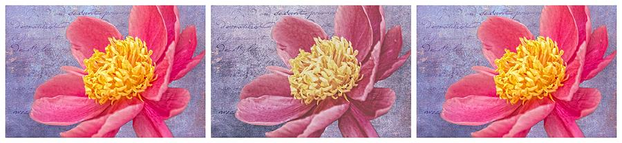 Floral Triptych Photograph - Pink Whispers Triptych by Alice Gipson