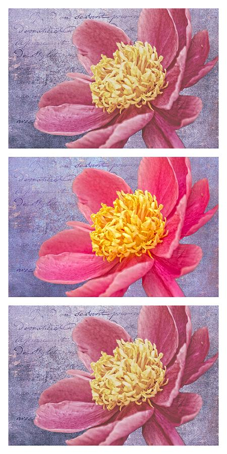 Triptych Photograph - Pink Whispers Two Vertical Triptych by Alice Gipson