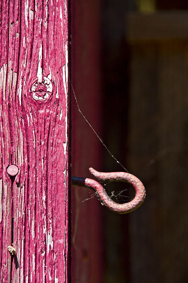 Pink Photograph - Pinked In by Evelina Kremsdorf