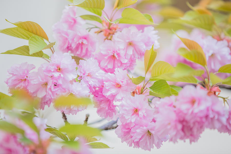 Pinkness by Karen Saunders