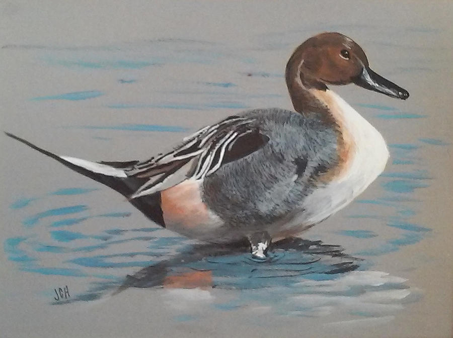 Wildlife Painting - Pintail by Jean Ann Curry Hess