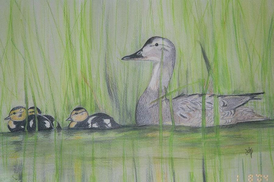 Pintail Ducks Painting - Pintails In The Reeds by Debra Sandstrom