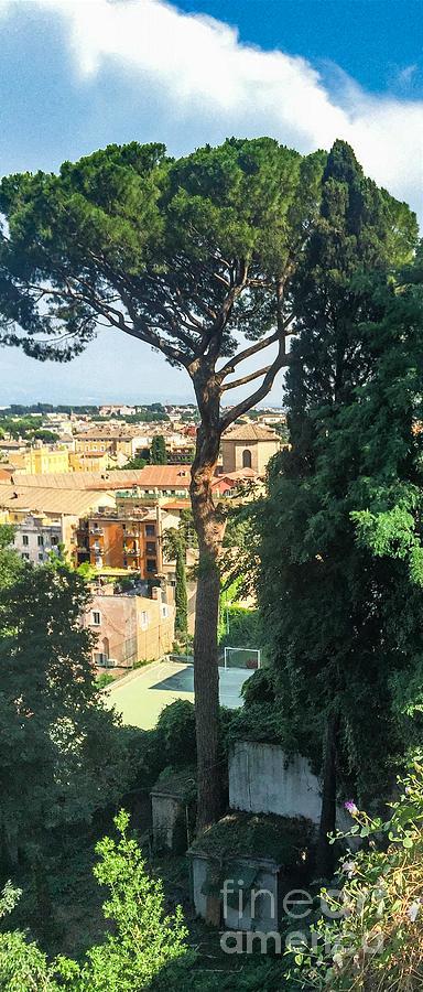Italian Stone Pine Photograph - Pinus Pinea by Joseph Yarbrough