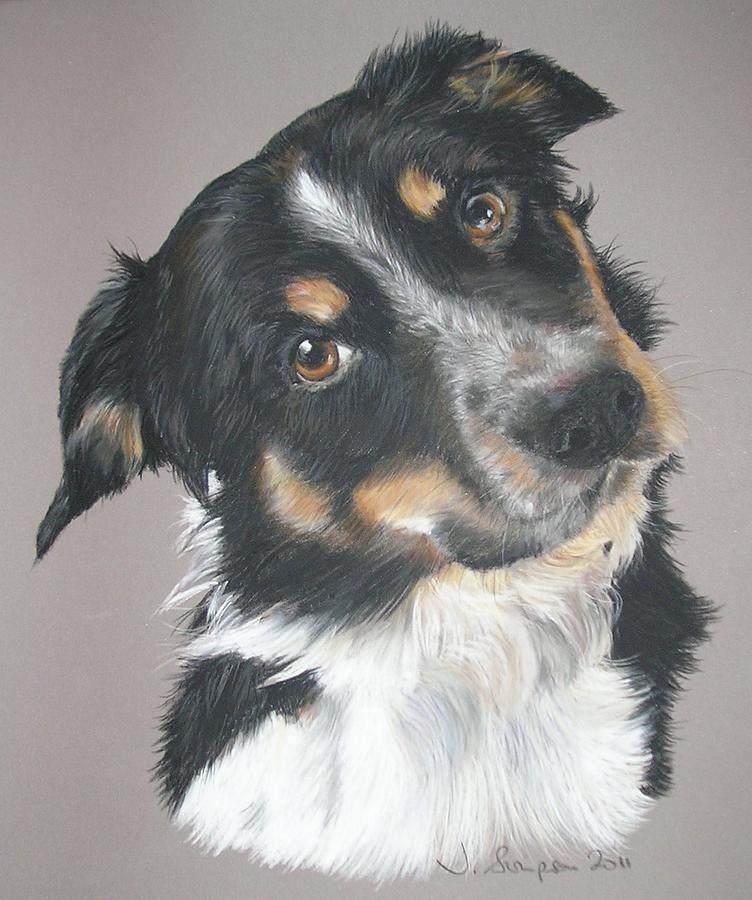 Border Collie Pastel - Pip by Joanne Simpson