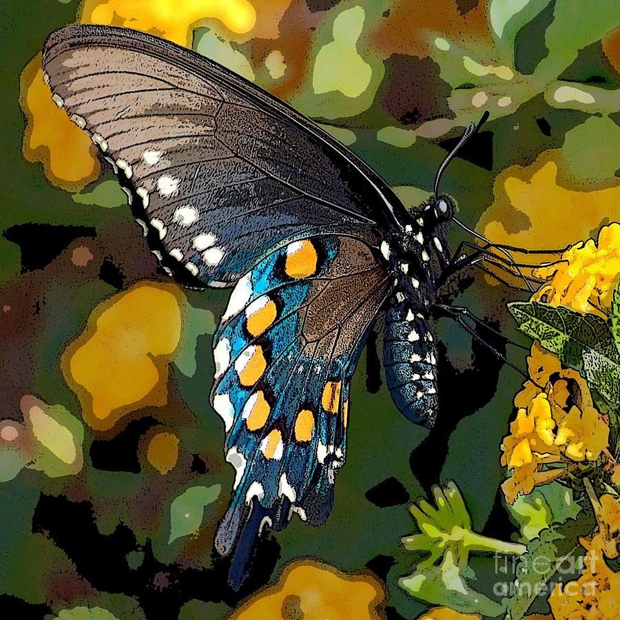 Pipevine Photograph - Pipevine Swallowtail Butterfly by David Smith