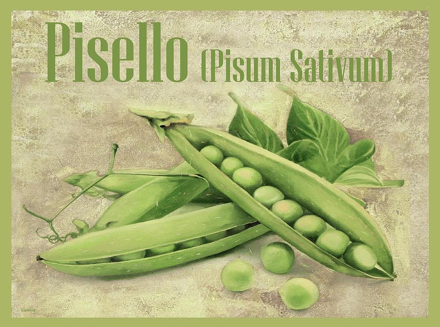 Pisello Pisum Sativum Painting