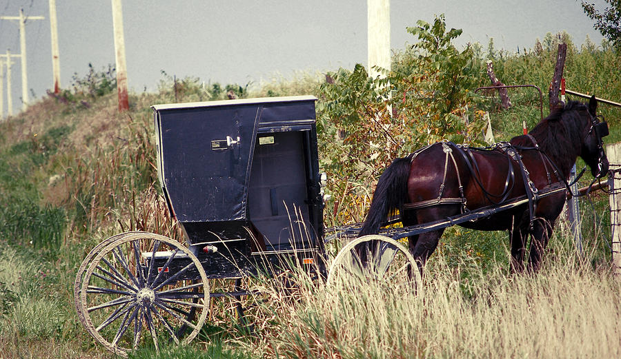 Amish Photograph - Pit Stop by Jame Hayes