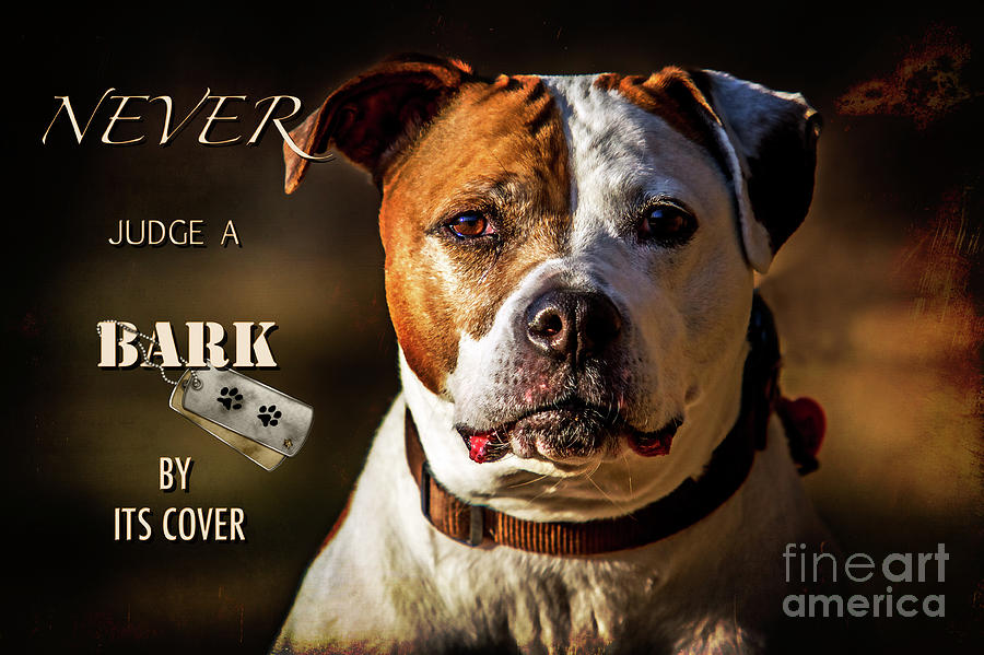 Pitbull Rescue Poster Photograph