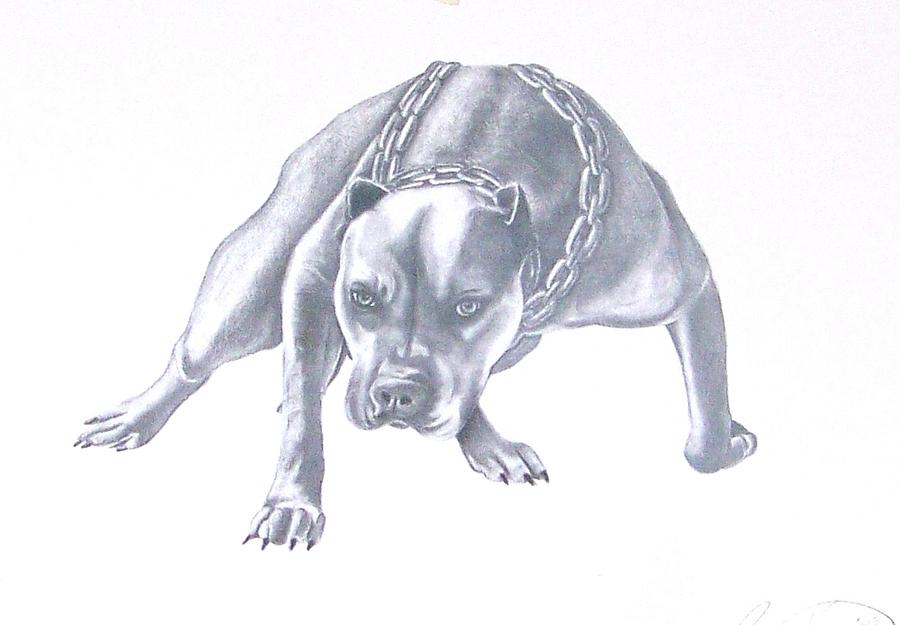 Chains Drawing - Pitt Bull With Chains by Rebecca Bellomo