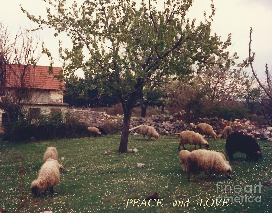 Place of PEACE and LOVE by Christina Verdgeline