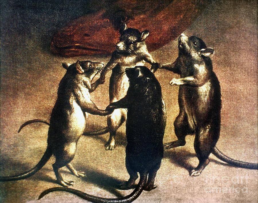 1800 Photograph - Plague: Dance Of The Rats by Granger