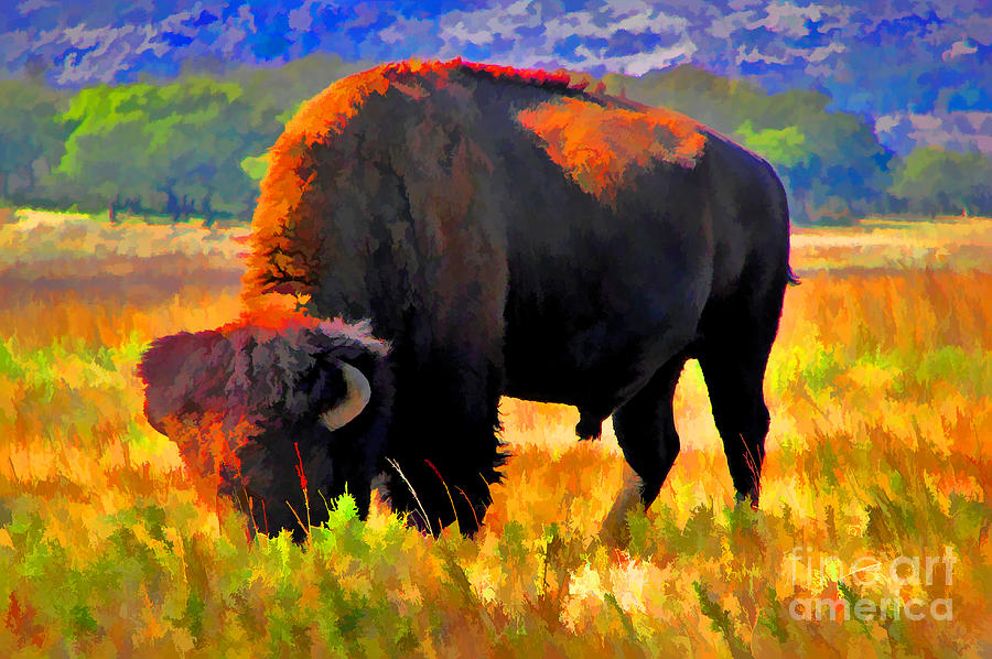 Bison Photograph - Plains Buffalo by JohnD Smith