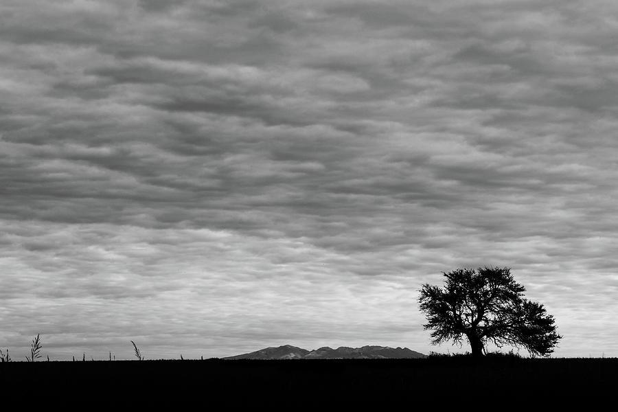 Plains Of Argentina Photograph
