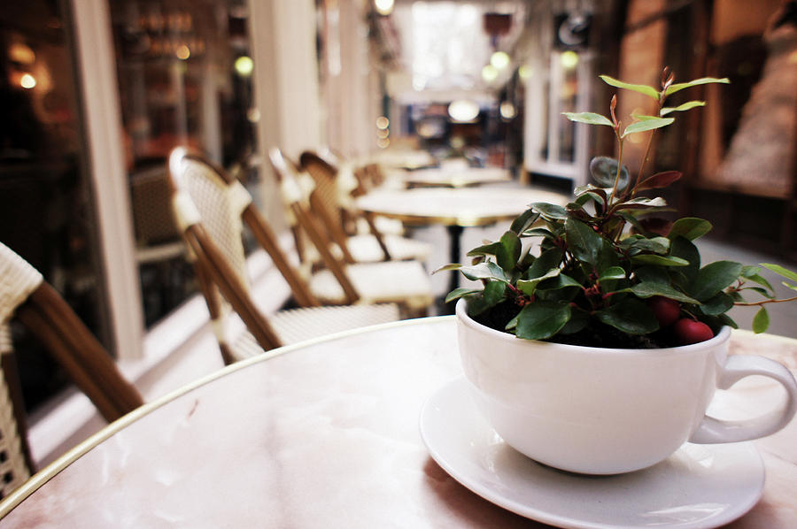 Cardiff Photograph - Plant In A Cup In A Cafe by Trance Blackman