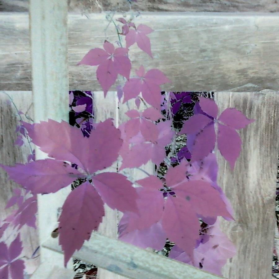 Plant In Negative Photograph by Cindy New