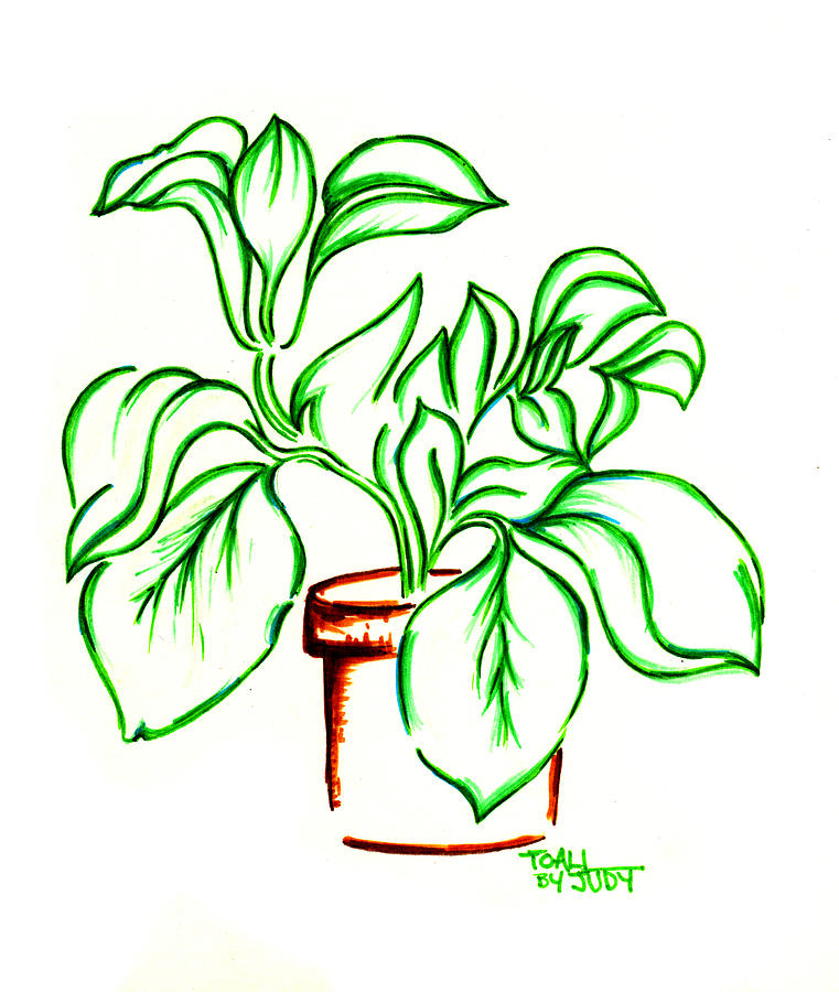house plants drawing. plant drawing by judith herbert house plants o