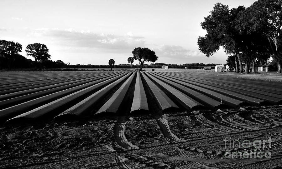 Farming Photograph - Planted Fields by David Lee Thompson
