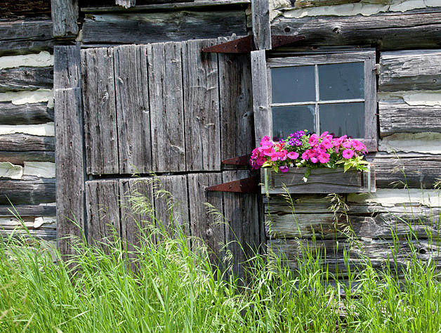 Flowers Photograph - Planter On Log Barn by George Sanquist