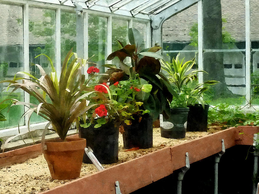 Greenhouse Photograph - Plants In Greenhouse by Susan Savad