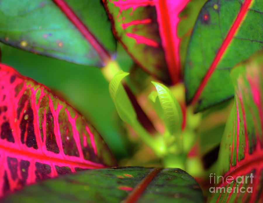 Plant Photograph - Plants In Hawaii by D Davila