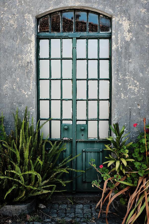 Plants In The Doorway Photograph