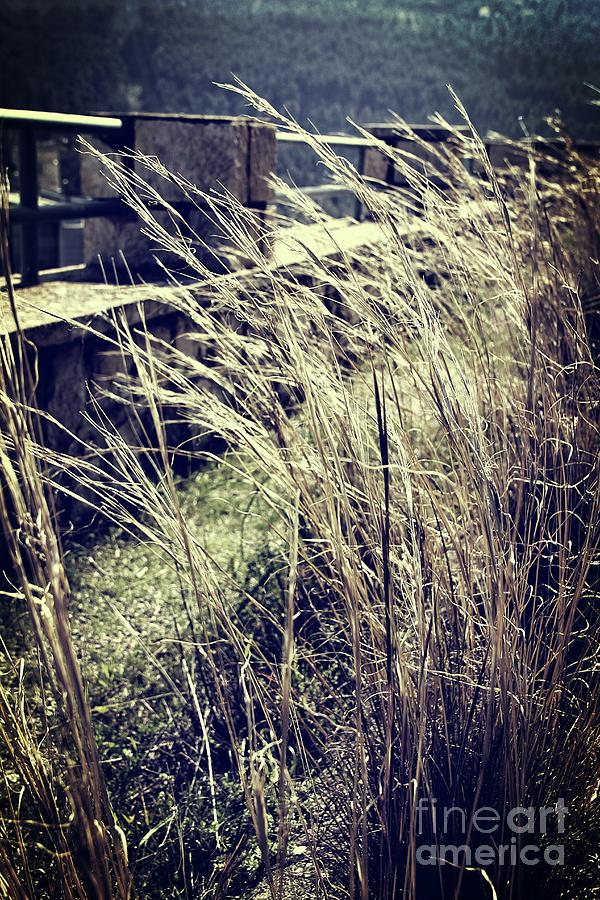Plants in the wind by Jackie Mestrom
