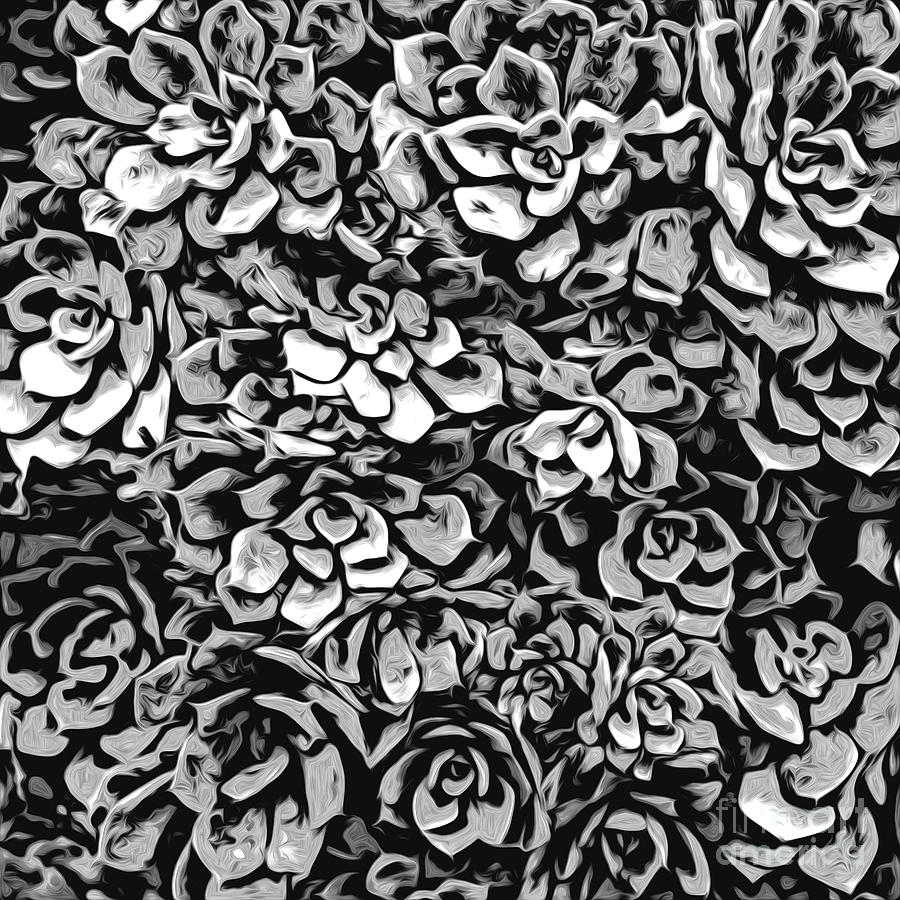 Succulents Digital Art - Plants Of Black And White by Phil Perkins