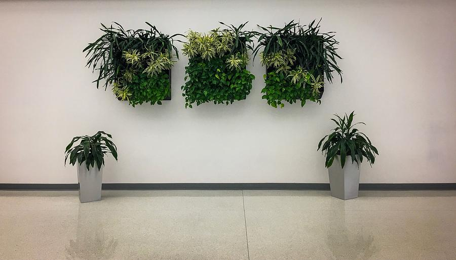 Plants On A Wall Photograph