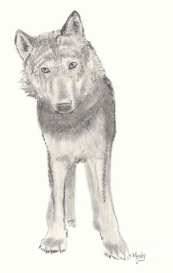 Wolf Drawing - Play With Me by Mendy Pedersen