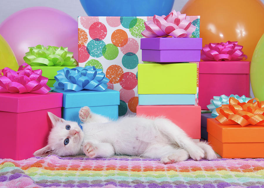 Fluffy Photograph - Playful Party Kitten Two by Sheila Fitzgerald