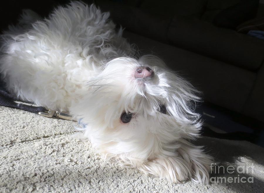 Dog Photograph - Playful Puppy by Lavender Liu
