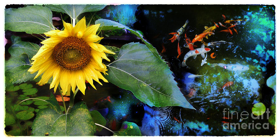 Sunflower Photograph - Playful Summer Nights by Gina Signore