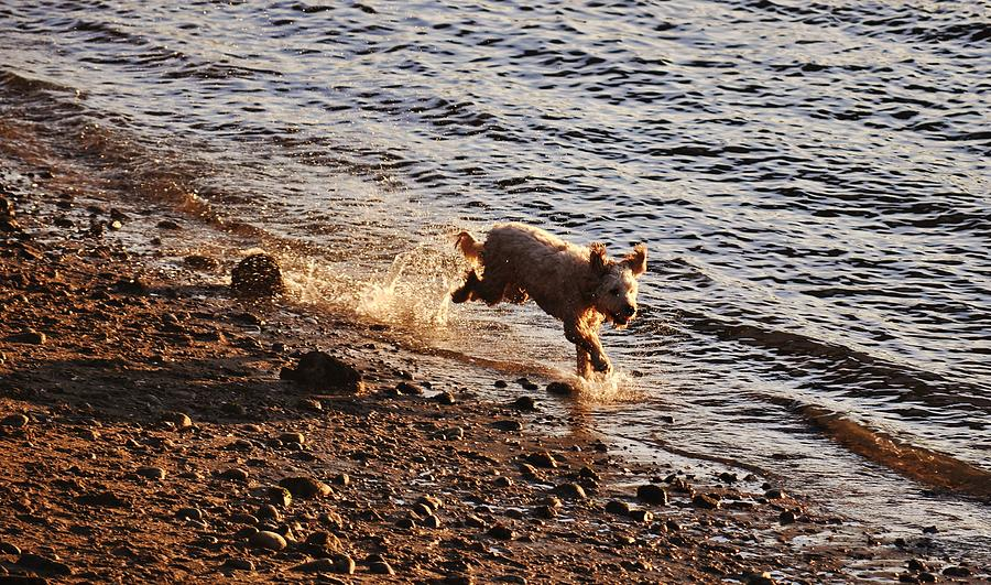 Dog Photograph - Riverbank Playtime  by JAMART Photography
